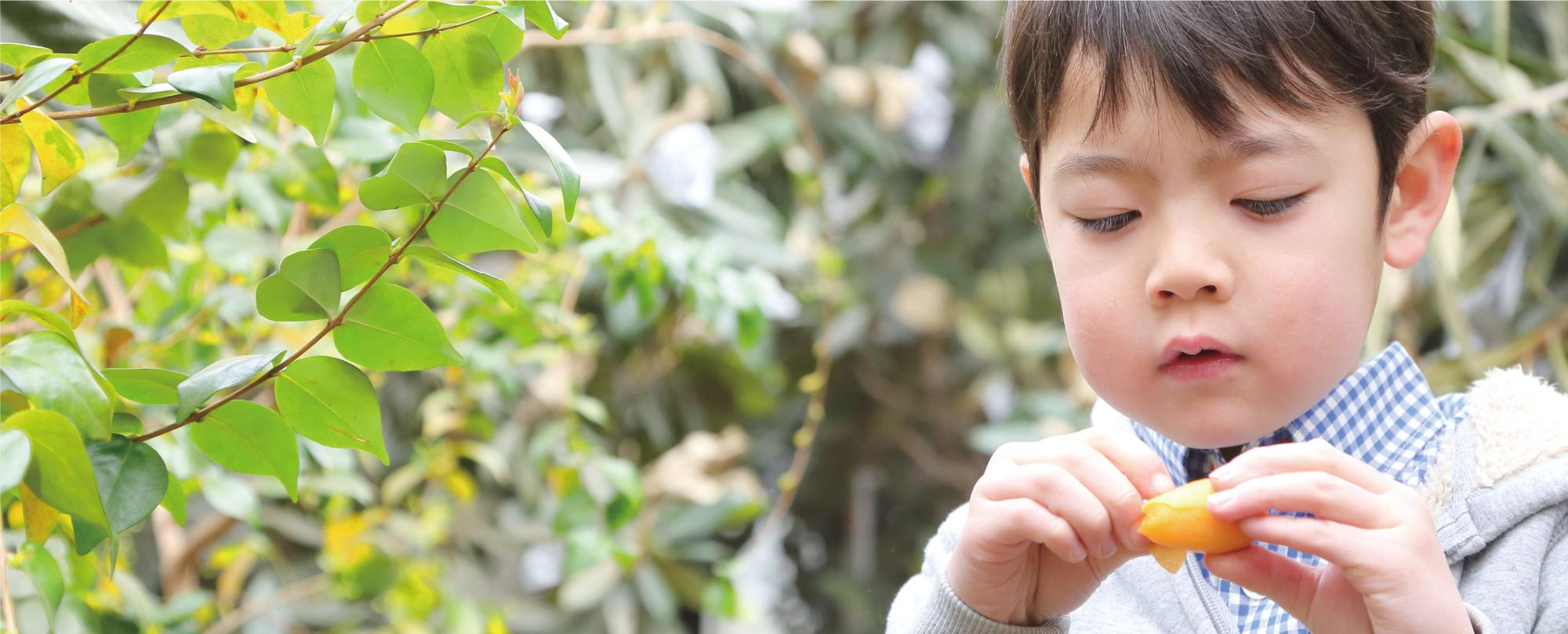 枇杷(びわ)の食べ方